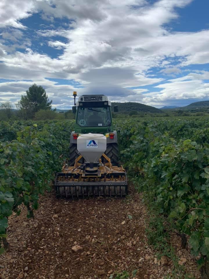 Semis entre les vignes