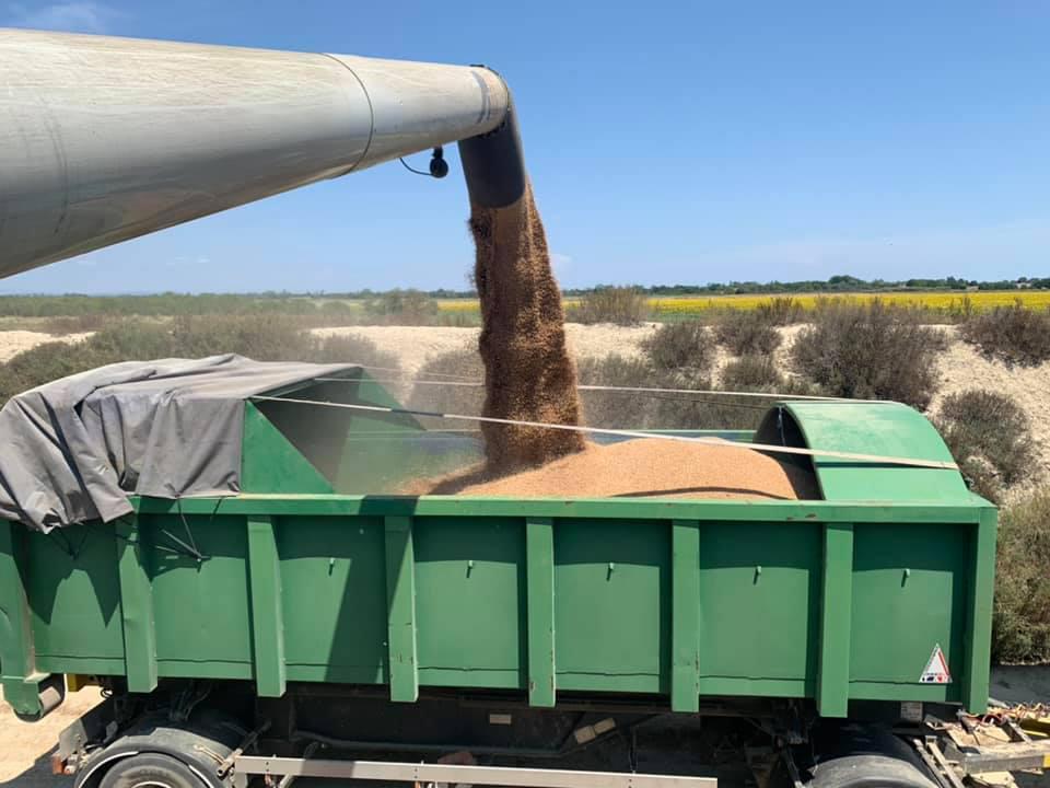 Benne pour le transport des récoltes